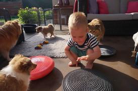 Thijn leert de pups balans en coördinatie