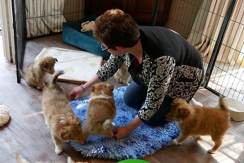 Heel veel puppy's