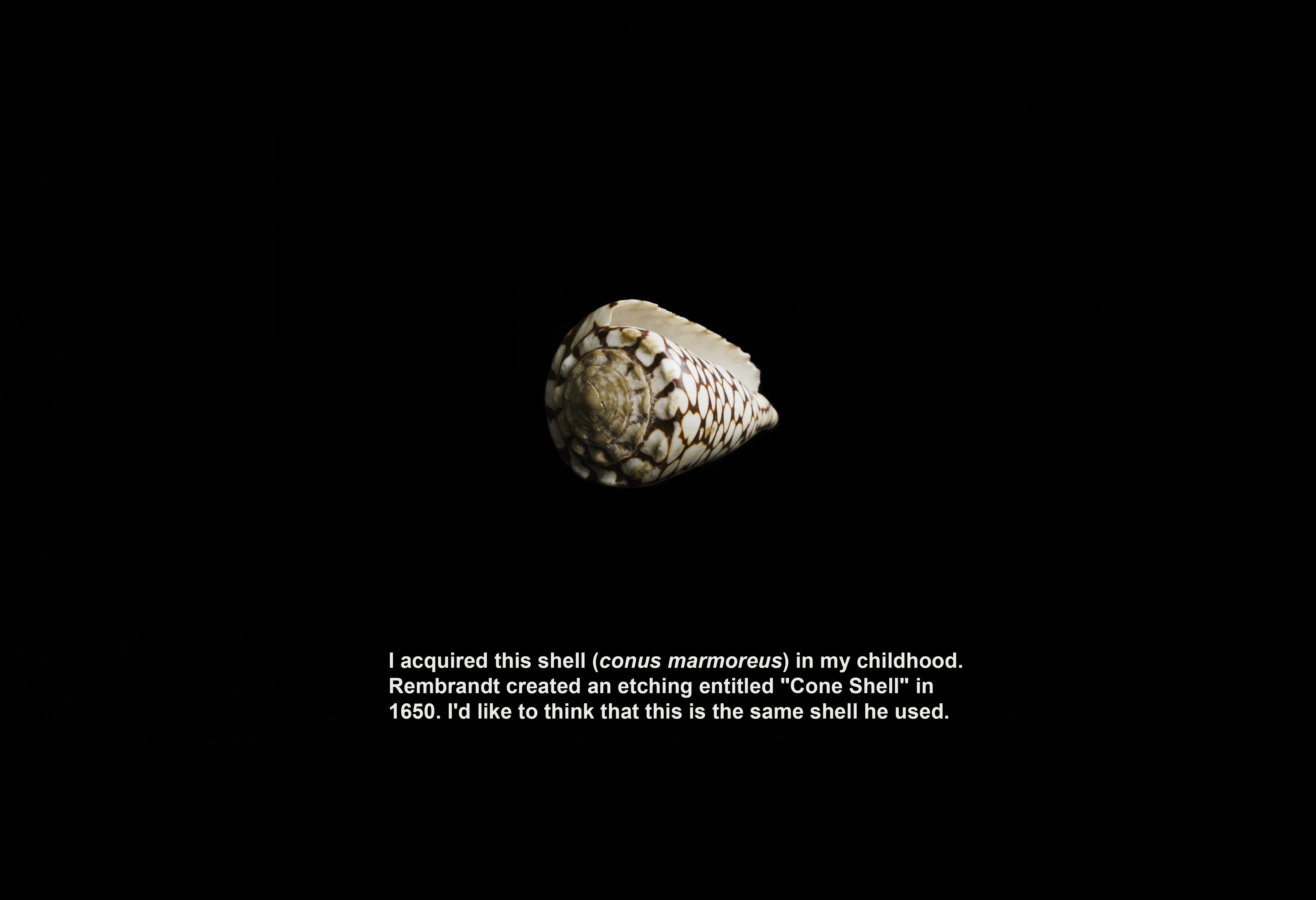 31_Rembrandt Shell_xTi_Final_PG