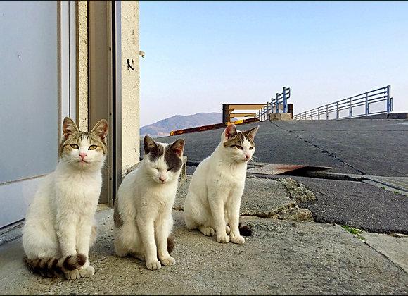 貓咪明信片 #22