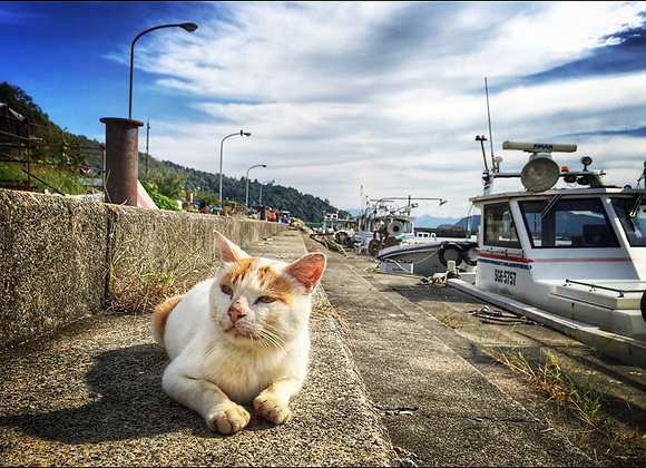 貓咪明信片 #28