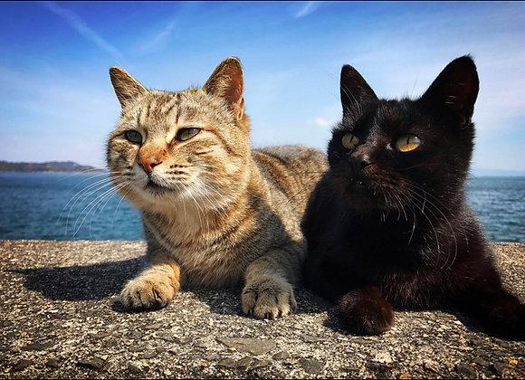 貓咪明信片 #10