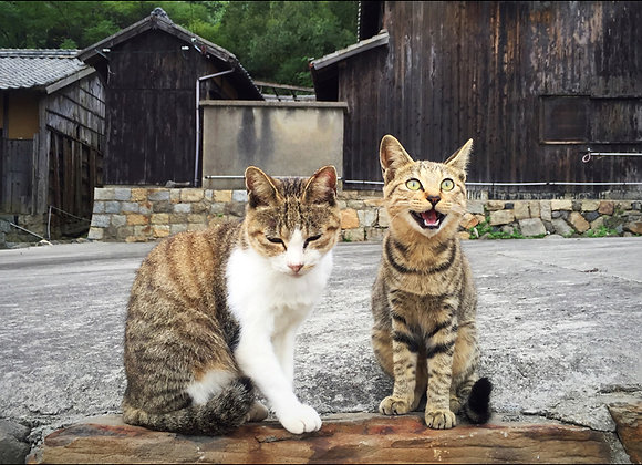 貓咪明信片 #18