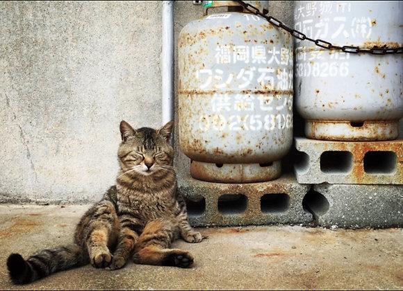 貓咪明信片 #01