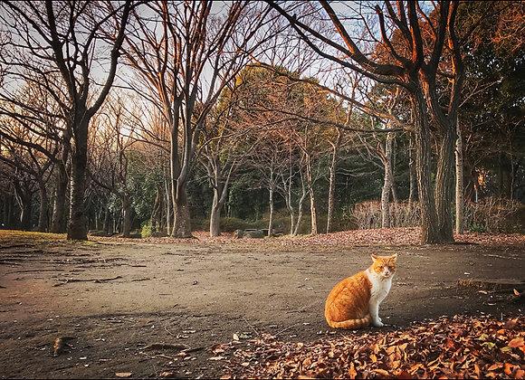 貓咪明信片 #24