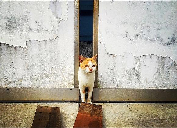貓咪明信片 #12