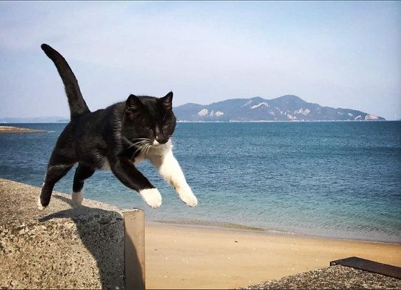 貓咪明信片 #31