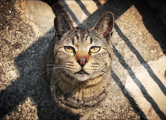 貓咪明信片 #11