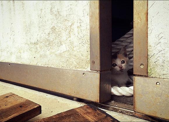 貓咪明信片 #17