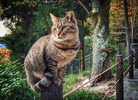 貓咪明信片 #15