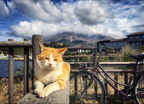 貓咪明信片 #13