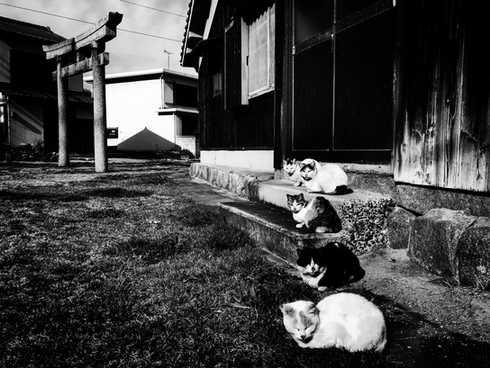 日本  |  香川縣  |  佐柳島