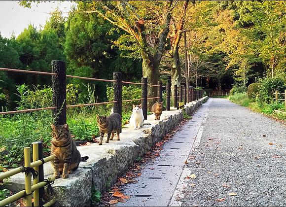 貓咪明信片 #21