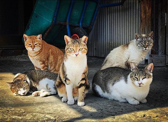 貓咪明信片 #02
