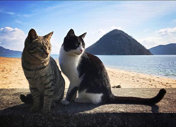貓咪明信片 #09