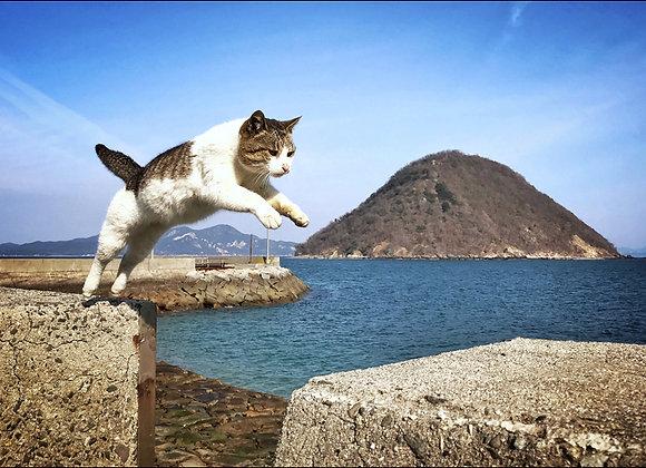 貓咪明信片 #03