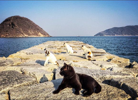 貓咪明信片 #23