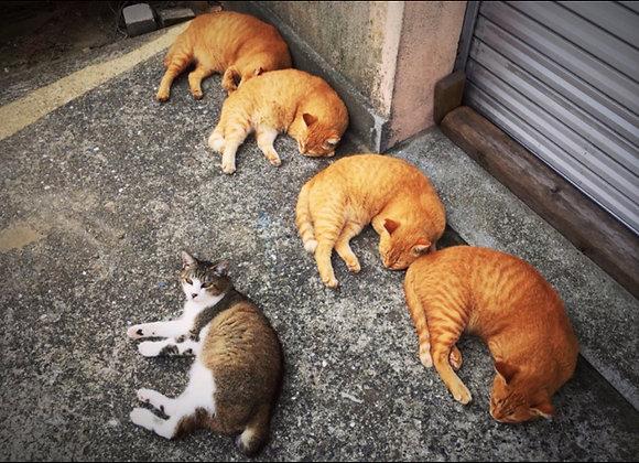 貓咪明信片 #05