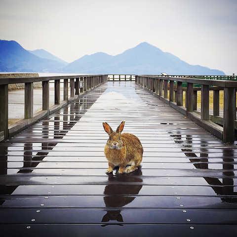 日本  |  廣島縣  |  大久野島