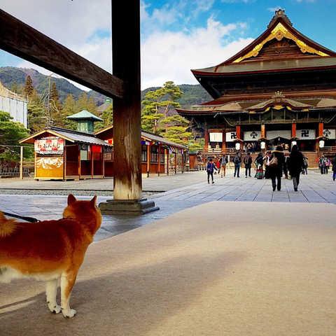 日本  |  長野縣  |  善光寺