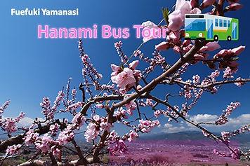 hanami_e.jpg