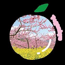 Fuefuki, thành phố fuefuki, yamanashi, tỉnh Yamanashi, nhật bản, Nhật Bản, du lịch Nhật Bản, du lịch fuefuki, du lịch, phượt, đào, đào nhật, đào nhât bản, quả đào nhật bản, tướng takeda, suối nước nóng, tắm onsen, rượu nho, rượu, ngắm hoa anh đào, ngắm hoa, trái cây nhật bản, hoa qua nhật bản, trái cây