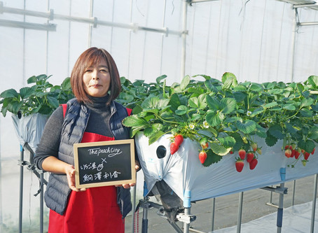 """Strawberries we grow from seedlings are like our kids""Cuter and tastier - A loving farmer's journey"