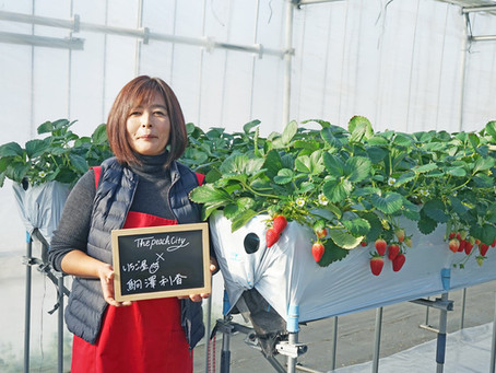 """""""Strawberries we grow from seedlings are like our kids""""Cuter and tastier - A loving farmer's journey"""