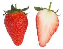 あきひめ, イチゴ