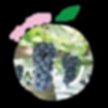 フルーツ狩り, 笛吹市, 山梨, 富士山, 桃, ぶどう, 温泉, ピーチシティ, インバウンド, 観光, 旅行, 外国人