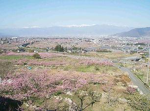 釈迦堂から桃の花_edit-compressed.jpg