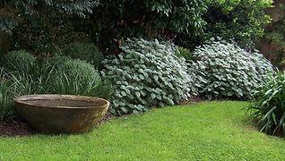 Water feature urn, Bowl, Plectranthus argentatus, garden - Le Page Design - Landscape