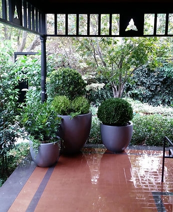 Large round planter pots & clipped balls - Le Page Design