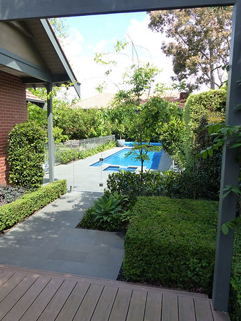 Clipped Box hedging, deck, pool - Le Page Design