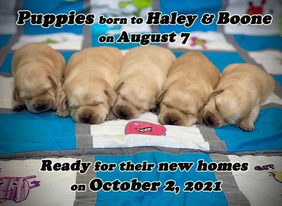 Haley x Boone 8-7-21.jpg