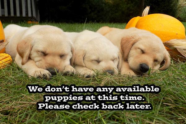 No puppies copy.jpg