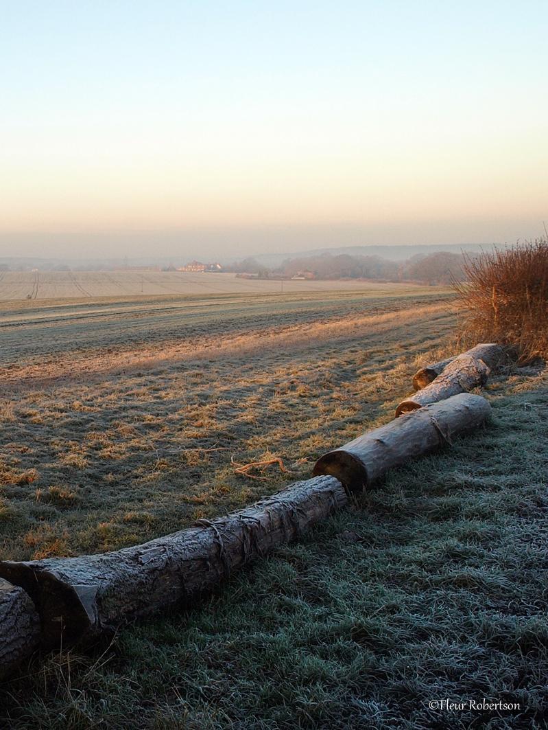 Surrey Farmland