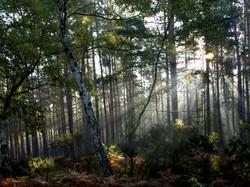 Wood mist