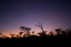 Stork sunrise, Serengeti