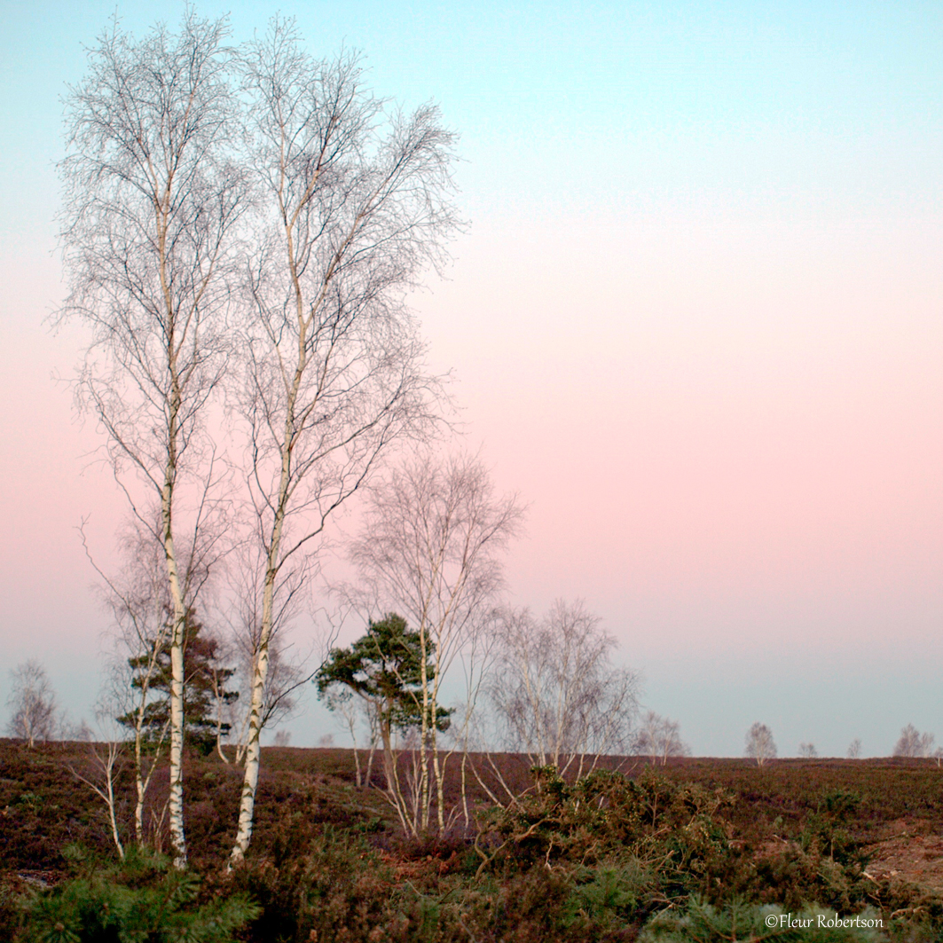 Heathland Twilight