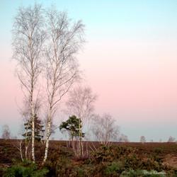 Heathland Twilight