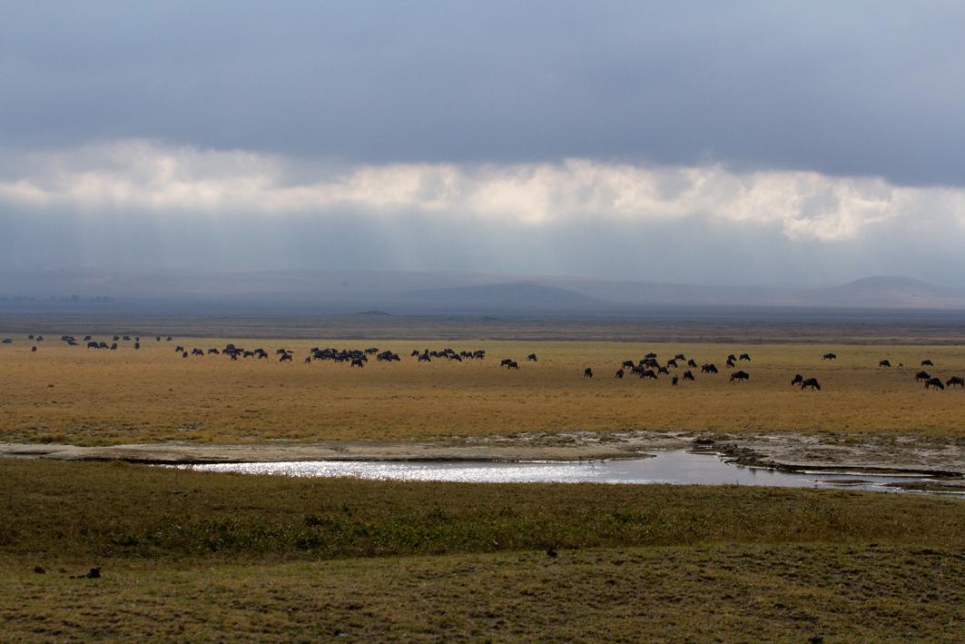 The Ngorongoro Plain