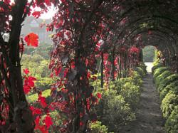 October Vine