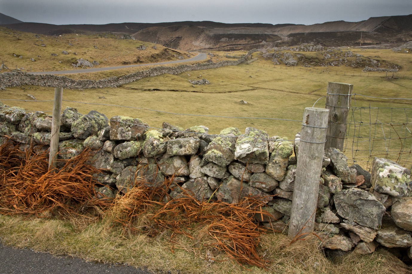 Winter grass, Uig, Lewis