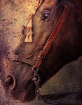 Andalucian Portrait