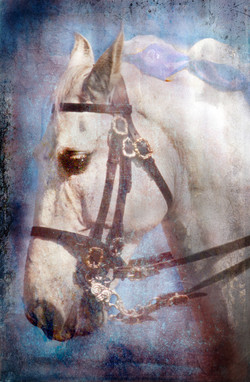 Andalucian Portrait II