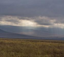 African Moor, Ngorongoro Crater NP
