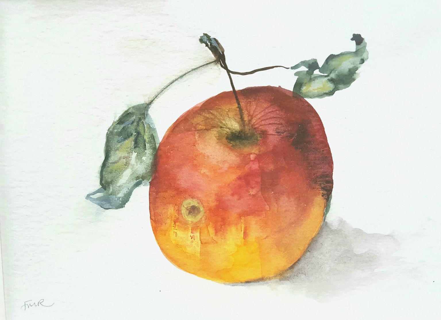 Apple Study II