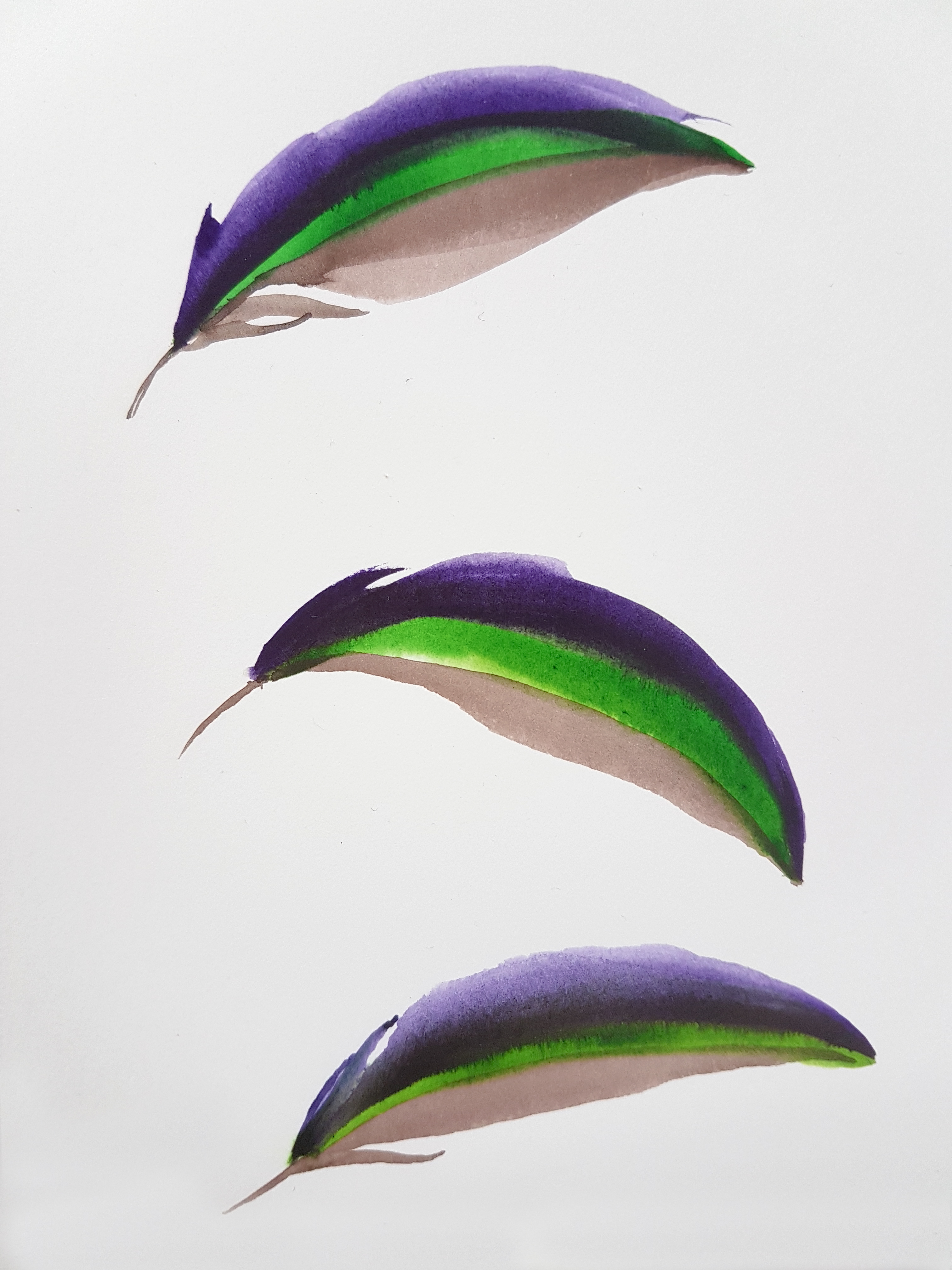 Study 2: Three Mallard Wing Feathers