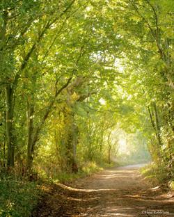 Spring Lane, Surrey